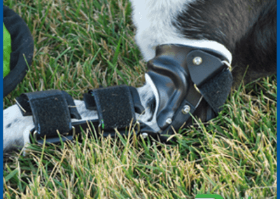 elbow brace for dogs