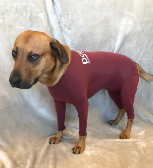Dog Ease Wound Protection Suits